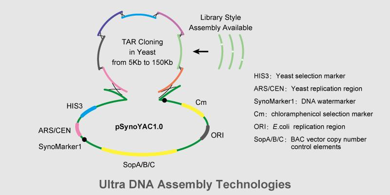 Synthesis-and-Assembly-Services-on-Gene-Cluster-and-Small-Genome