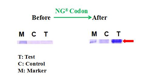 codon-optimization