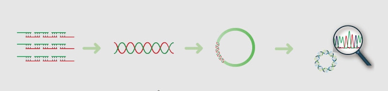 gene-synthesis-process